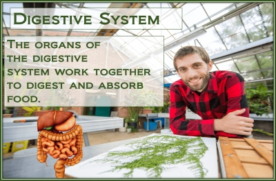 PathologyPrevention With The Digestive System