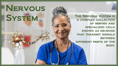 PathologyPrevention With The Nervous System