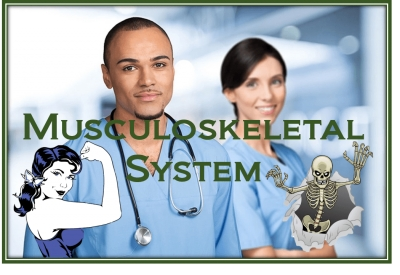 PathologyPrevention With The Musculoskeletal System
