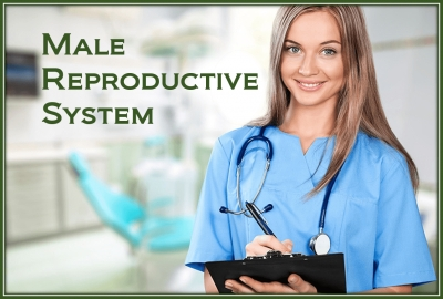 PathologyPrevention With The Male Reproductive System