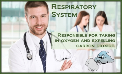 PathologyPrevention With Respiratory System
